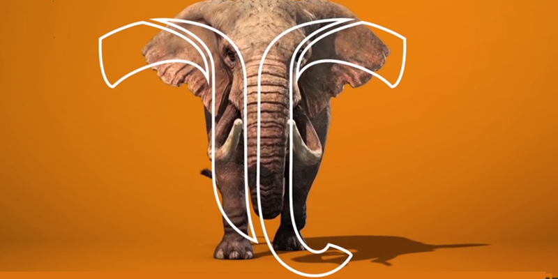 Tembo: a new name for an existing group of companies